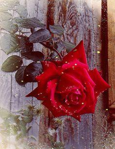 Imagenes+Animadas+De+Rosas+Rojas+Con+Brillos+Y+Destellos