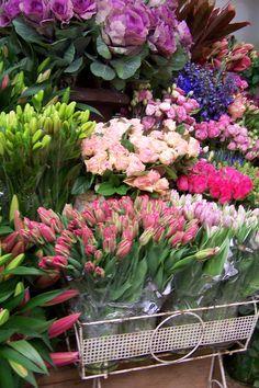 An abundance of flowers