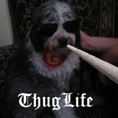Thug life dog