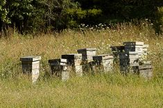 Bee hive boxes - aka an apiary. Bee Hives Boxes, Bee Boxes, Raising Bees, Raising Chickens, Hives And Honey, Honey Bees, I Love Bees, Bee Skep, Bee Farm