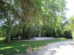 2014 - Mas des Comtes de Provence - Jacqueline et Pierre - Le parc - Cérémonie sous les platanes