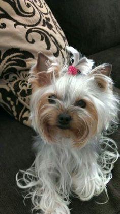 Cutie so foo-foo but alas chi-chi to the max!