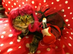 Pawsitively Pets: Happy Dress Up Your Pet Day!