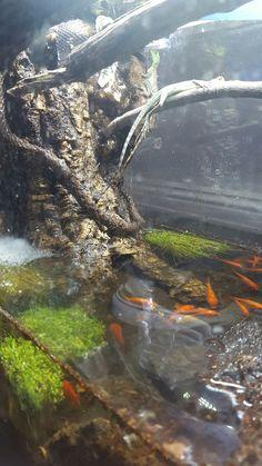 Feeder fish plants Argonians🌊🐊🌿🐟