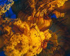 Vancouver Aquarium on Behance