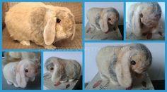 Needle Felt Bunny Rabbit/Pet by Puppyduck Makes Needle Felting Supplies, Felt Bunny, Needle Felted Animals, Bunny Rabbit, Creative Gifts, Craft Fairs, Craft Gifts, Handmade Crafts, Gift Ideas