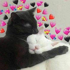 Tú y yo así, no sé, piénsalo. Cute Cat Memes, Cute Love Memes, I Love Cats, Cute Cats, Funny Cats, Baby Animals, Funny Animals, Cute Animals, Kittens Cutest