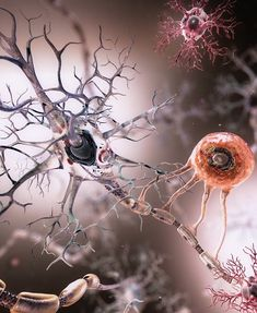Immune response in the human brain accurately measured for the first time ever. Immune response in the human brain accurately measured for the first time ever. Brain Anatomy, Anatomy Art, Anatomy And Physiology, Human Anatomy, Anatomy Drawing, Brain Art, Brain Science, Science Art, Science News