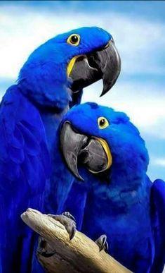 Amazing Royal Blue