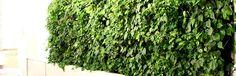 Mobilne zielone ściany