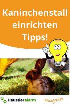 """Jetzt die """"Kostenlosen Tipp"""" zum einrichten von einem Kaninchenstall ansehen... Rabbit, Animals, Animales, Bunny, Rabbits, Animaux, Bunnies, Animal, Animais"""