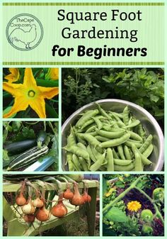 Beginners Guide to Square Foot Gardening - The Cape Coop Gardening Supplies, Pune, Companion Planting Chart, Companion Gardening, Vegetable Garden Tips, Gardening Vegetables, Herb Gardening, Urban Gardening, Veggie Gardens