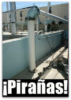 Del agua potable de Cabo San Lucas, robaron el cableado