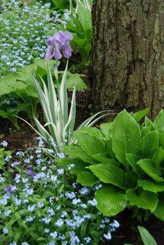 plantes d'ombre pour le jardin idées de déco