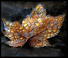 stunning leaf