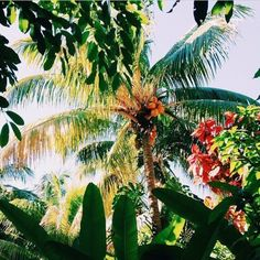 summer, tropical, and palm trees image Tropical Vibes, Tropical Paradise, Summer Paradise, Jeff The Killer, Summer Vibes, Summer Fun, Ocean Wave, To Infinity And Beyond, Island Life
