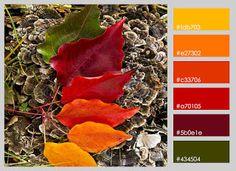 Paletas de color (XXIII)