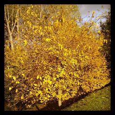 El color del otoño...