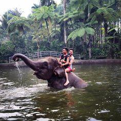 Elephant Safari Park, Taro - Ubud in Ubud Gianyar, Bali