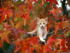 Is this not an adorable fall pic? :D