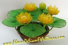 PHOTO ONLY ~ 5 Lotus jaunes