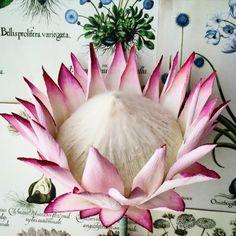 paper and silk king protea - but see the coloured petals Crepe Paper Flowers Tutorial, Paper Flowers Craft, Flower Crafts, Diy Flowers, Faux Flowers, Flor Protea, Protea Flower, Parle Avec Elle, Diy Paper