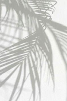 STYLEeGRACE ❤'s palm trees!