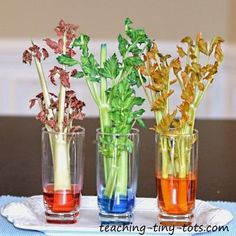 Toddler Science: Celery Experiment, Learn about Plants and How They Absorb Water in This Science Project for Kids