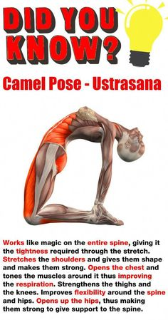 Fancy learning the camel pose? We have complied 12 exercises to help improve your posture, strength, flexibility and range of motion! Because your posture is important and unfortunately daily life doesn't always help to maintain this. Yoga Fitness, Fitness Tips, Fitness Motivation, Health Fitness, Physical Fitness, Planet Fitness, Muscle Fitness, Workout Fitness, Fitness Tracker