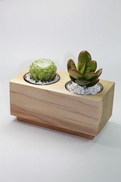 Sempervivum arachnoideum and Kalanchoe luciae planted in a Poplar cube designed by DMS-Design in FL. Purchase it at www.modgreenus.com