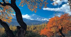 Hunza valley in autumn, view of Rakaposhi (7785m) from view point karimabad city in Northern Area of Pakistan!!