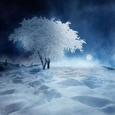 It's so calm here, I just want to make snow-angels under the moon!