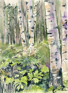 Watercolor of birch trees in the woods