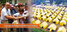Candaba Distributes 8,000 Free Chickens | PSSC Live Chicken, Bird Flu, Free Chickens, Word Of God, Poultry, Backyard Chickens