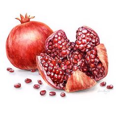 Pomegranates Pomegranate Art, Art And Illustration, Illustrations And Posters, Food Design, Watercolor Fruit, Watercolour, Catering Logo, Color Pencil Sketch, Visual Identity