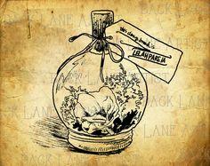 Vintage Bottle Terrarium Clipart Illustration by BackLaneArtist