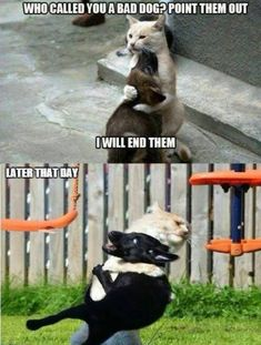 Have Some Laughs With These Fresh Animal Memes ; haben sie etwas lachen mit diesen frischen tier memen Have Some Laughs With These Fresh Animal Memes ; Funny Animal Jokes, 9gag Funny, Stupid Funny Memes, Cute Funny Animals, Cute Baby Animals, Cute Animal Humor, Dog Jokes, Scary Funny, Hilarious Animal Memes
