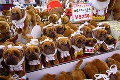@nifty:デイリーポータルZ:土佐犬の顔がこわい