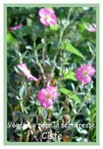 Jardiner sans argent blog