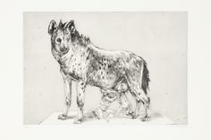 Victor-Romulus And Remus Drypoint -HR Victoria And Albert Museum, Fine Art, Victor, Lion Sculpture, Art, Contemporary African Art, Romulus And Remus, Contemporary Art, South African Artists