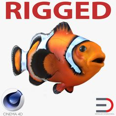 Clownfish Rigged for Cinema 4D