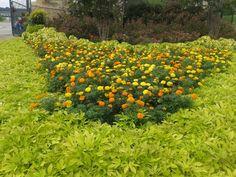 Flores de zempaxuchitl