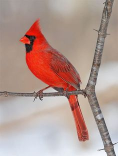 Discover the best foods to attract the winter birds you want to see with these simple tips, each of which is paired with a gorgeous winter bird photo. Pretty Birds, Cute Birds, Beautiful Birds, Exotic Birds, Colorful Birds, Exotic Pets, Angry Birds, Animals And Pets, Cute Animals