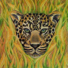 ⭐️  ⭐️One of my favorite animals #tropicalwonderland #milliemarotta #milliemarottatropicalwonderland #milliemarottabooks #milliemarottafans #cololoring #coloringforadult #coloringbookforadult #coloringbook #adultcoloring #adultcoloringbook #prismacolor #leopard #africananimals