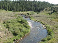 Trout stream in Idaho