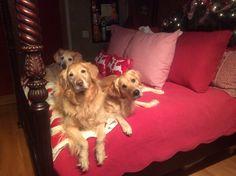 Zuzu, Willie and Skye