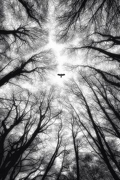 Soaring above the trees.