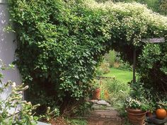 Plant sweet autumn clematis for a fast-climbing vine that also blooms with tiny white flowers. #gardens