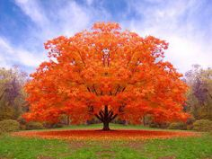 Fall Colors #tree
