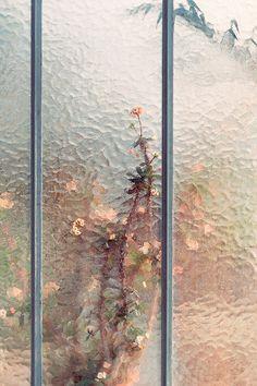 Gorgeous external shots ofbotanical gardens that look more like paintings than photographs by Swiss photographer Samuel Zeller. More images below.         Samuel Zeller's Website Via Ignant